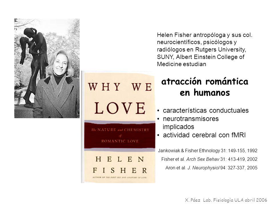 Helen Fisher antropóloga y sus col. neurocientíficos, psicólogos y radiólogos en Rutgers University, SUNY, Albert Einstein College of Medicine estudia