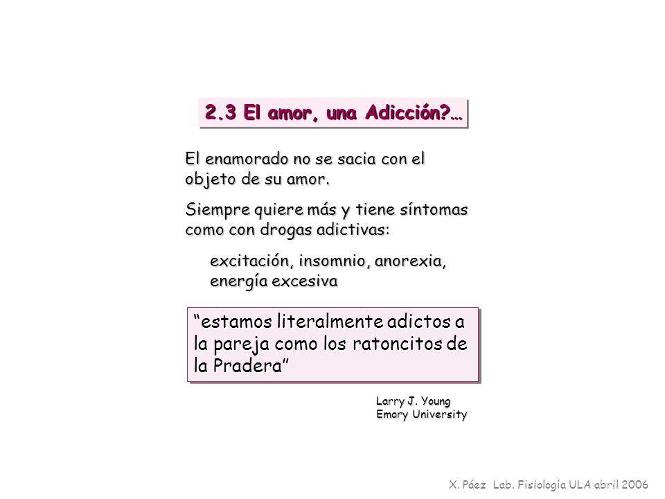 X. Páez Lab. Fisiología ULA abril 2006 2.3 El amor, una Adicción?… estamos literalmente adictos a la pareja como los ratoncitos de la Pradera Larry J.