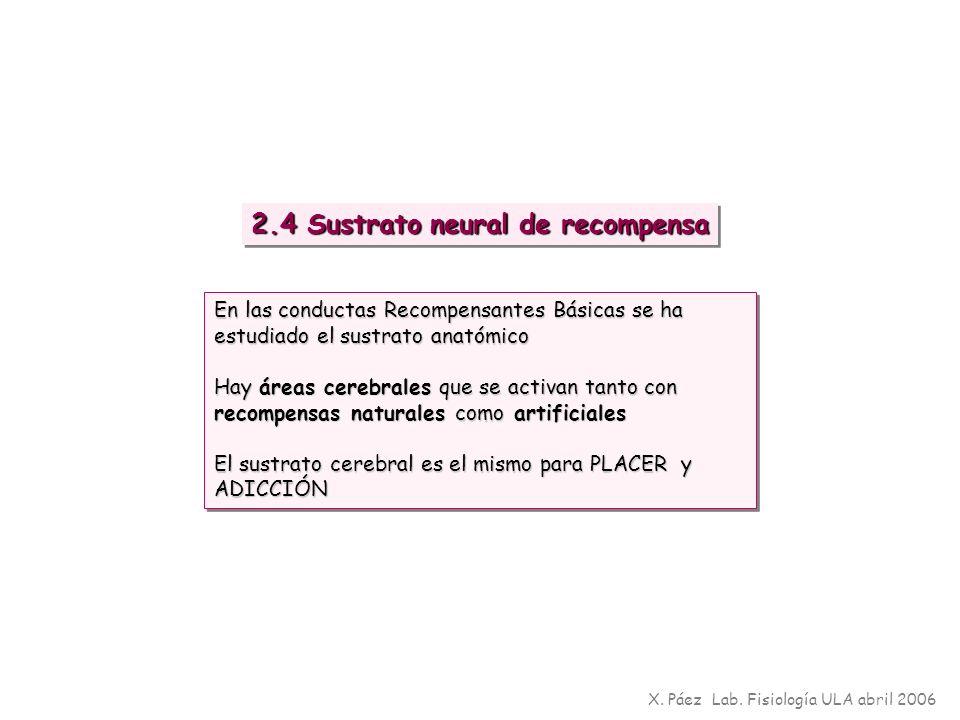 X. Páez Lab. Fisiología ULA abril 2006 2.4 Sustrato neural de recompensa En las conductas Recompensantes Básicas se ha estudiado el sustrato anatómico