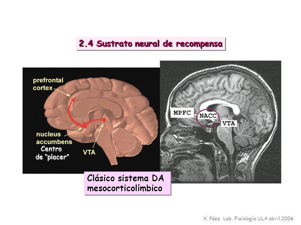 X. Páez Lab. Fisiología ULA abril 2006 2.4 Sustrato neural de recompensa Centro de placer Clásico sistema DA mesocorticolímbico mesocorticolímbico