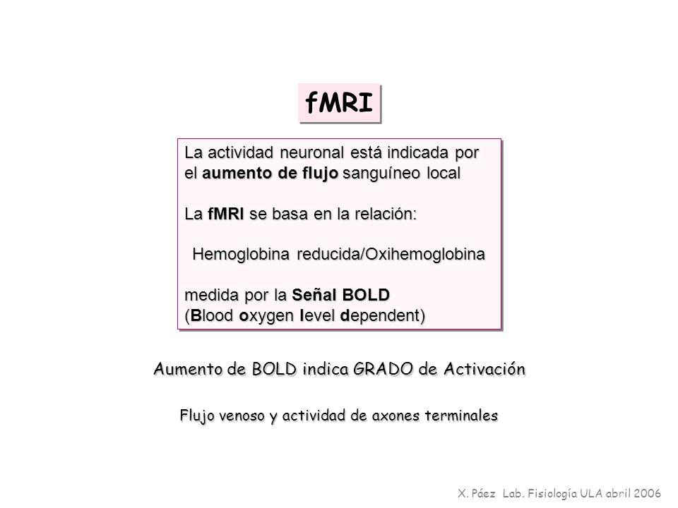fMRIfMRI La actividad neuronal está indicada por el aumento de flujo sanguíneo local La fMRI se basa en la relación: Hemoglobina reducida/Oxihemoglobi