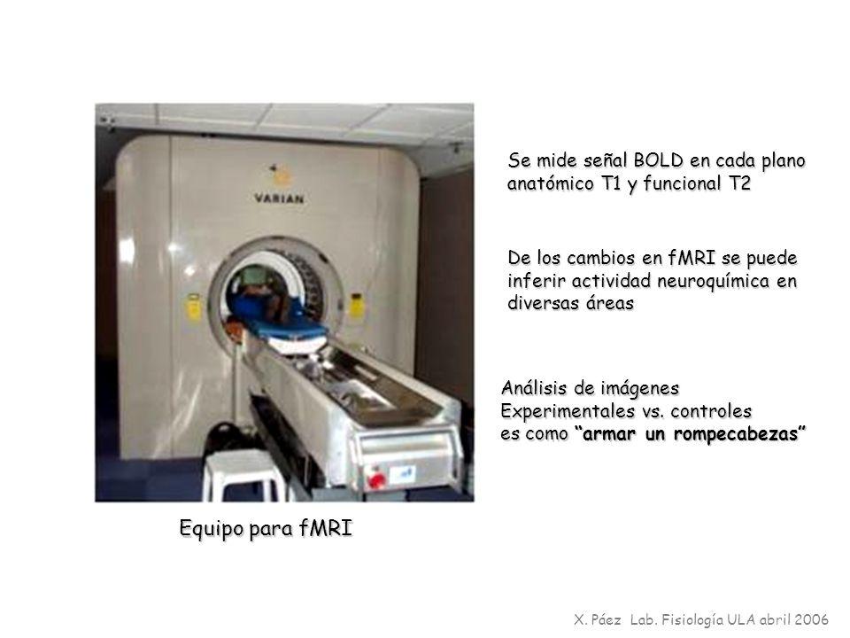 X. Páez Lab. Fisiología ULA abril 2006 Equipo para fMRI De los cambios en fMRI se puede inferir actividad neuroquímica en diversas áreas Análisis de i