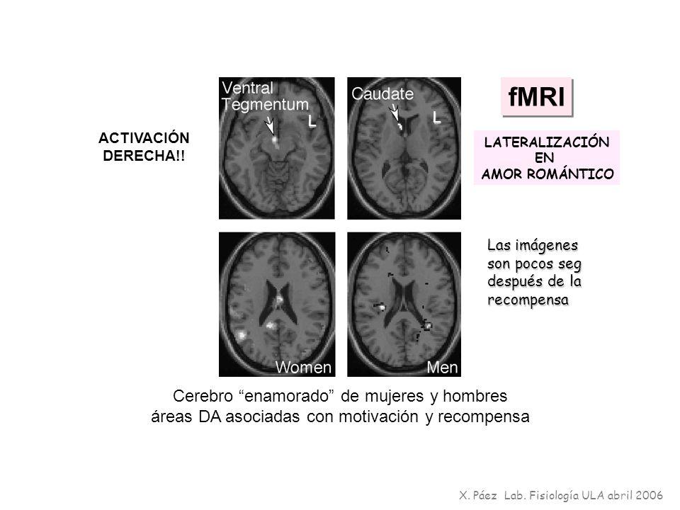fMRI Cerebro enamorado de mujeres y hombres áreas DA asociadas con motivación y recompensa ACTIVACIÓN DERECHA!! X. Páez Lab. Fisiología ULA abril 2006