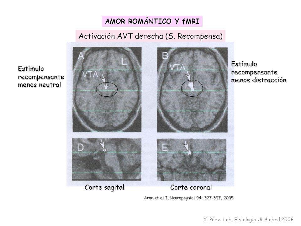 Activación AVT derecha (S. Recompensa) Corte sagital Corte coronal Aron et al J. Neurophysiol 94: 327-337, 2005 AMOR ROMÁNTICO Y fMRI X. Páez Lab. Fis