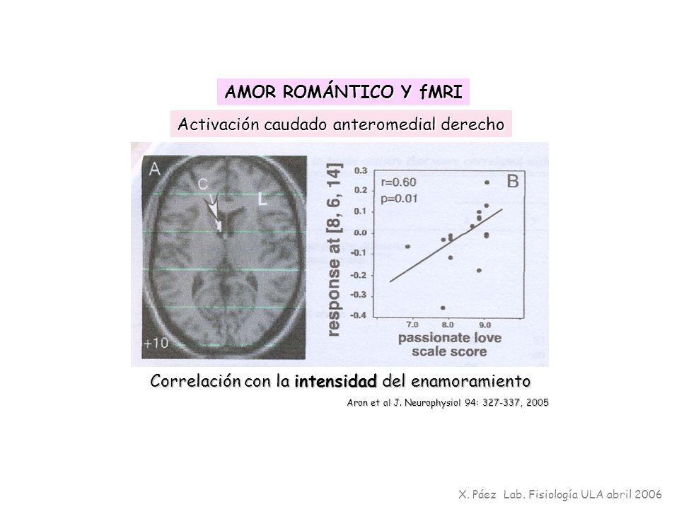 Activación caudado anteromedial derecho Correlación con la intensidad del enamoramiento Aron et al J. Neurophysiol 94: 327-337, 2005 X. Páez Lab. Fisi