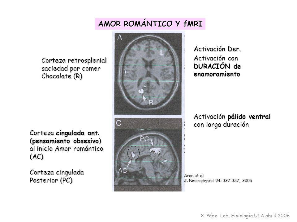 X. Páez Lab. Fisiología ULA abril 2006 Corteza retrosplenial saciedad por comer Chocolate (R) Corteza cingulada ant. (pensamiento obsesivo) al inicio