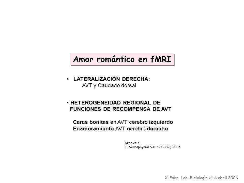 X. Páez Lab. Fisiología ULA abril 2006 Amor romántico en fMRI LATERALIZACIÓN DERECHA: LATERALIZACIÓN DERECHA: AVT y Caudado dorsal AVT y Caudado dorsa