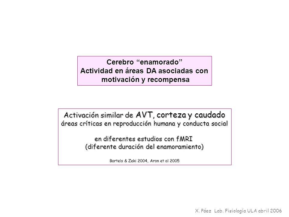 X. Páez Lab. Fisiología ULA abril 2006 Cerebro enamorado Actividad en áreas DA asociadas con motivación y recompensa motivación y recompensa Activació