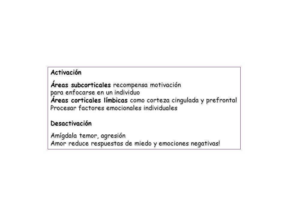 Activación Áreas subcorticales recompensa motivación para enfocarse en un individuo Áreas corticales límbicas como corteza cingulada y prefrontal Proc