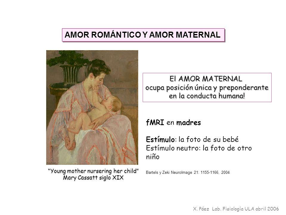 X. Páez Lab. Fisiología ULA abril 2006 AMOR ROMÁNTICO Y AMOR MATERNAL Bartels y Zeki NeuroImage 21: 1155-1166, 2004 Young mother nursering her child M
