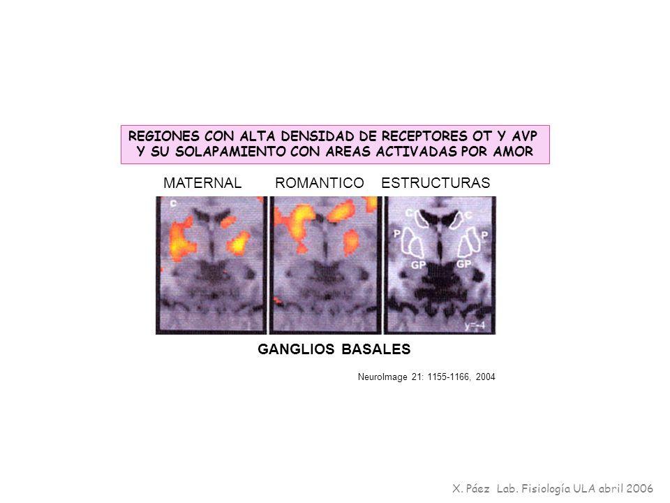 GANGLIOS BASALES REGIONES CON ALTA DENSIDAD DE RECEPTORES OT Y AVP Y SU SOLAPAMIENTO CON AREAS ACTIVADAS POR AMOR NeuroImage 21: 1155-1166, 2004 MATER