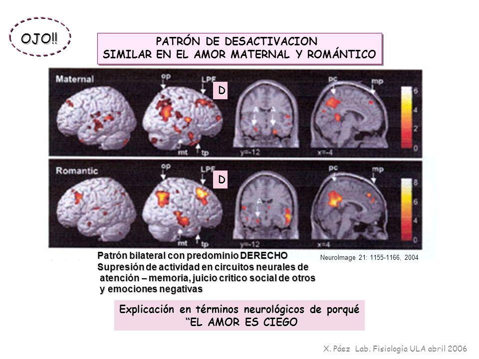 PATRÓN DE DESACTIVACION SIMILAR EN EL AMOR MATERNAL Y ROMÁNTICO PATRÓN DE DESACTIVACION SIMILAR EN EL AMOR MATERNAL Y ROMÁNTICO Patrón bilateral con p