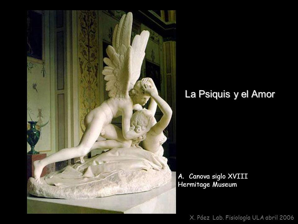 La Psiquis y el Amor X. Páez Lab. Fisiología ULA abril 2006 A. A.Canova siglo XVIII Hermitage Museum