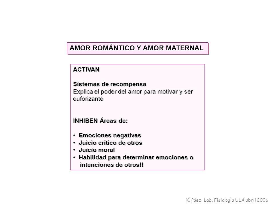 X. Páez Lab. Fisiología ULA abril 2006 AMOR ROMÁNTICO Y AMOR MATERNAL ACTIVAN Sistemas de recompensa Explica el poder del amor para motivar y ser eufo
