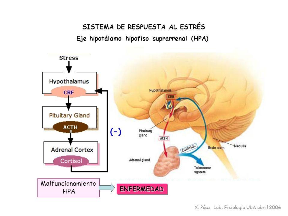 (-) SISTEMA DE RESPUESTA AL ESTRÉS Eje hipotálamo-hipofiso-suprarrenal (HPA) X. Páez Lab. Fisiología ULA abril 2006 Malfuncionamiento HPA ENFERMEDADEN