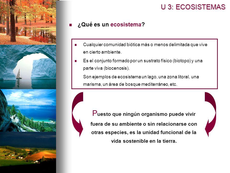 ¿Qué es un ecosistema? U 3: ECOSISTEMAS Cualquier comunidad biótica más o menos delimitada que vive en cierto ambiente. Es el conjunto formado por un
