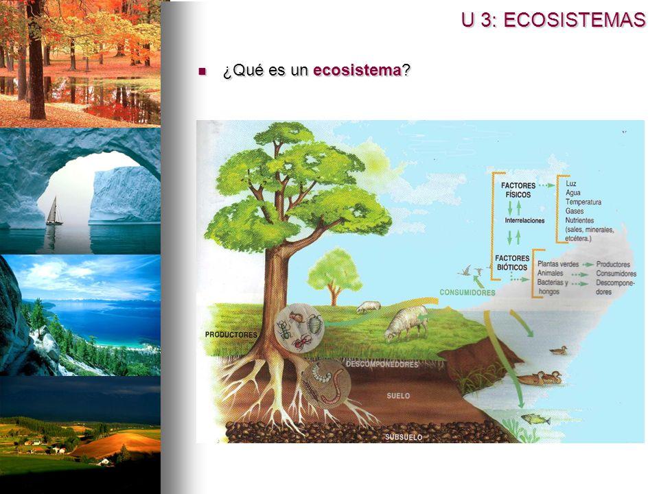 U 3: ECOSISTEMAS ¿Qué es un ecosistema? ¿Qué es un ecosistema?