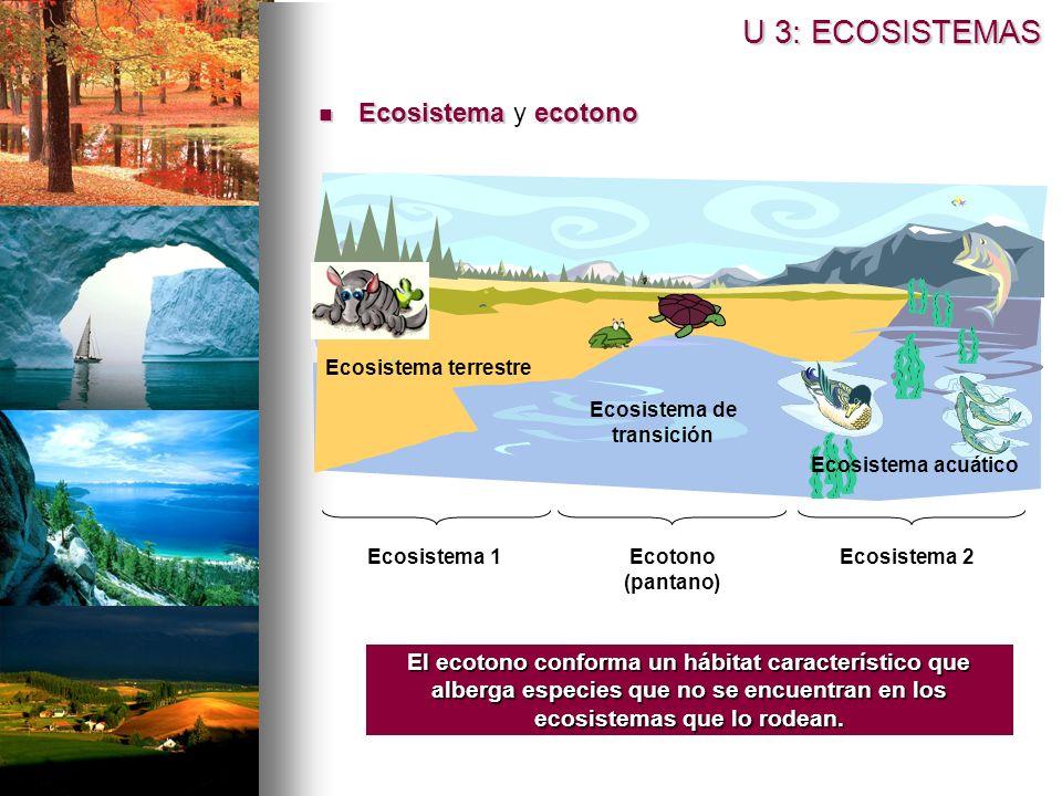 Ecosistema ecotono Ecosistema y ecotono U 3: ECOSISTEMAS El ecotono conforma un hábitat característico que alberga especies que no se encuentran en los ecosistemas que lo rodean.