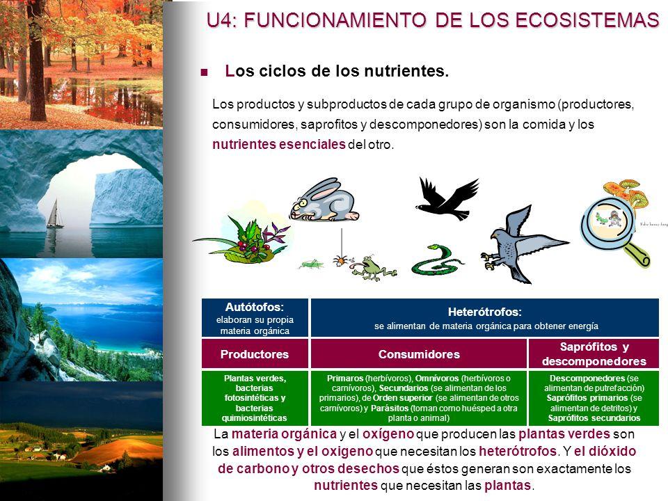 Los ciclos de los nutrientes. Productores Los productos y subproductos de cada grupo de organismo (productores, consumidores, saprofitos y descomponed
