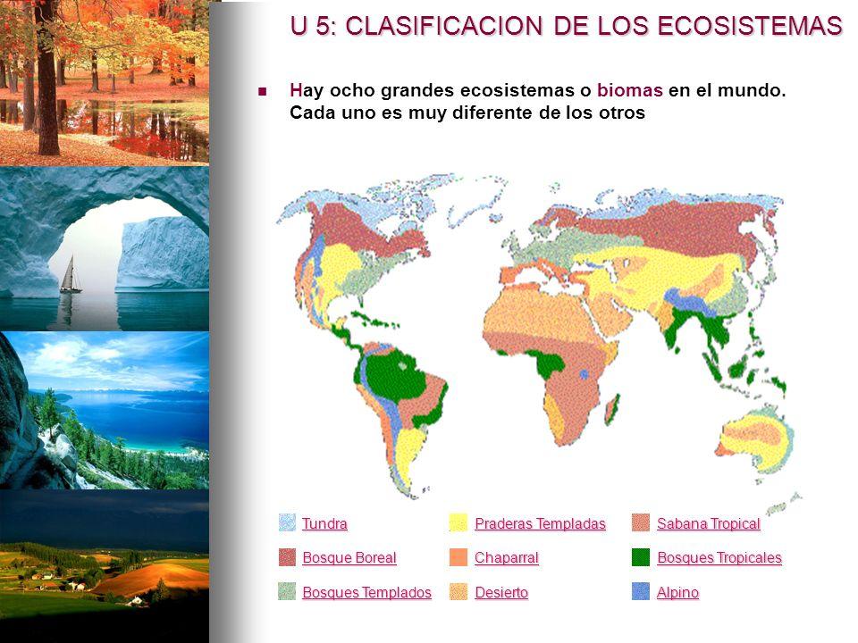 Hay ocho grandes ecosistemas o biomas en el mundo.