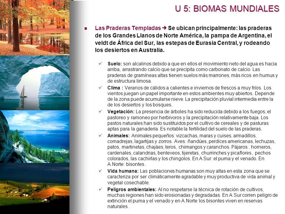 Las Praderas Templadas Se ubican principalmente: las praderas de los Grandes Llanos de Norte América, la pampa de Argentina, el veldt de África del Su