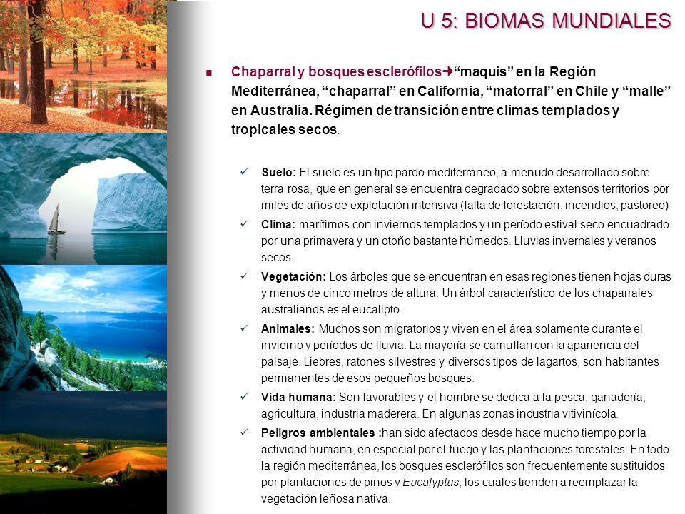 Chaparral y bosques esclerófilos maquis en la Región Mediterránea, chaparral en California, matorral en Chile y malle en Australia.