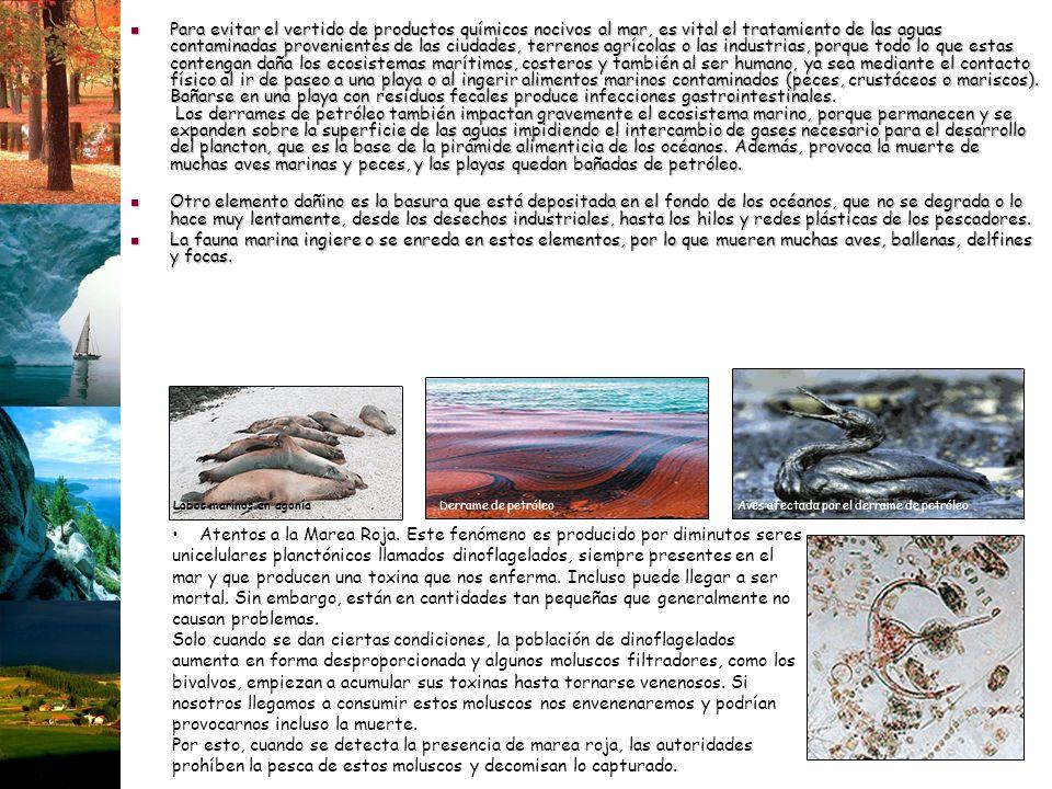 Para evitar el vertido de productos químicos nocivos al mar, es vital el tratamiento de las aguas contaminadas provenientes de las ciudades, terrenos