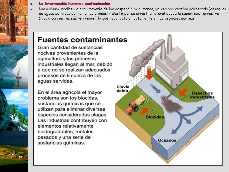 La intervención humana: contaminación La intervención humana: contaminación Los océanos reciben la gran mayoría de los desperdicios humanos, ya sea po