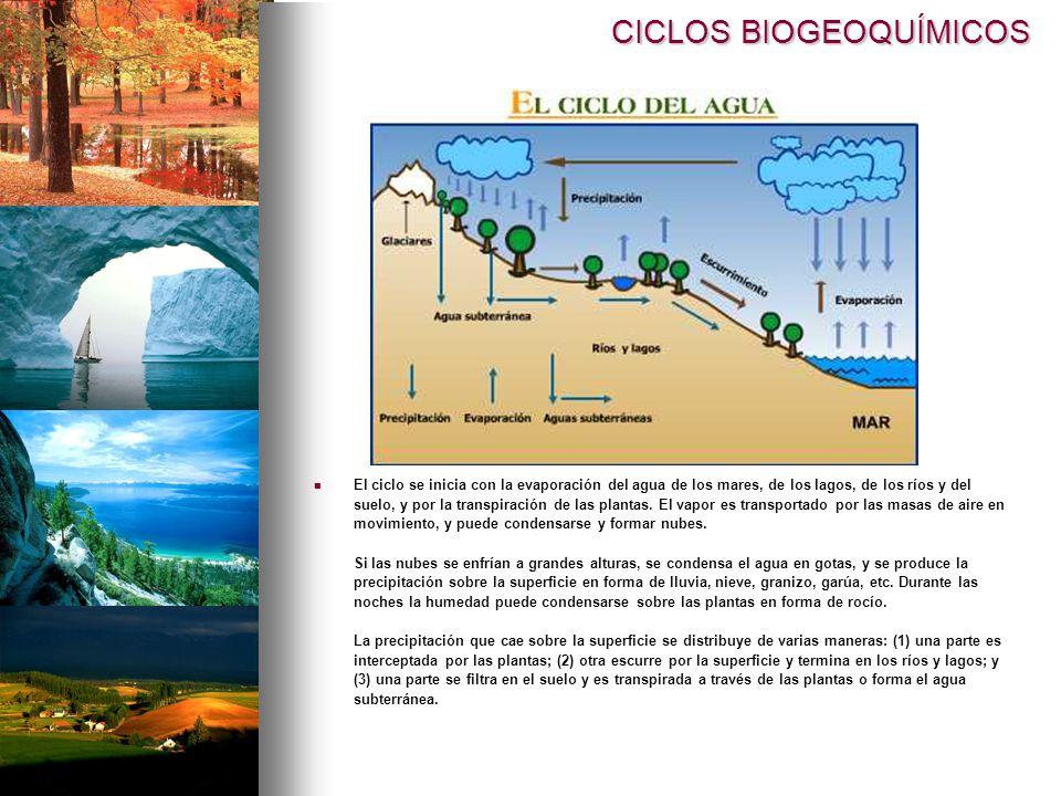 CICLOS BIOGEOQUÍMICOS El ciclo se inicia con la evaporación del agua de los mares, de los lagos, de los ríos y del suelo, y por la transpiración de las plantas.