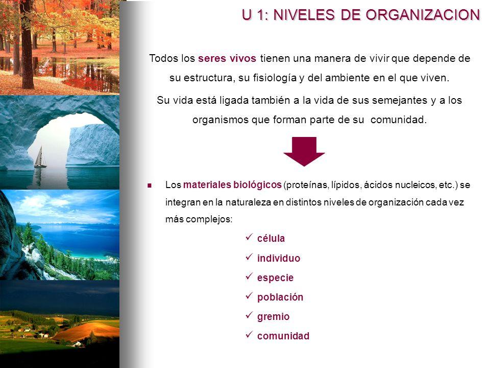 Los materiales biológicos (proteínas, lípidos, ácidos nucleicos, etc.) se integran en la naturaleza en distintos niveles de organización cada vez más