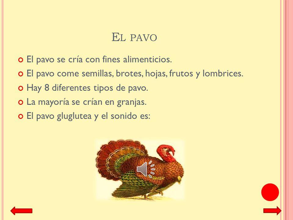 E L POLLITO El pollito es el hijo de la gallina. El pollito sale de un huevo. El pollito siempre esta junto con su mamá gallina y sus hermanos pollito