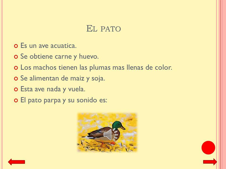 E L PAVO El pavo se cría con fines alimenticios. El pavo come semillas, brotes, hojas, frutos y lombrices. Hay 8 diferentes tipos de pavo. La mayoría