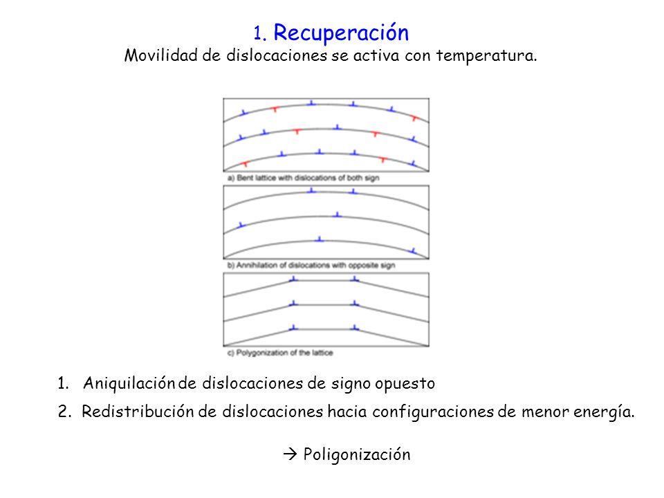 1.Aniquilación de dislocaciones de signo opuesto 2. Redistribución de dislocaciones hacia configuraciones de menor energía. 1. Recuperación Movilidad