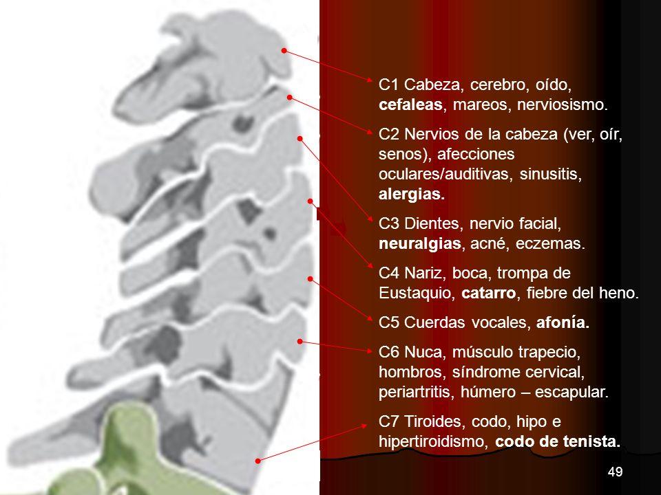 C1 Cabeza, cerebro, oído, cefaleas, mareos, nerviosismo. C2 Nervios de la cabeza (ver, oír, senos), afecciones oculares/auditivas, sinusitis, alergias