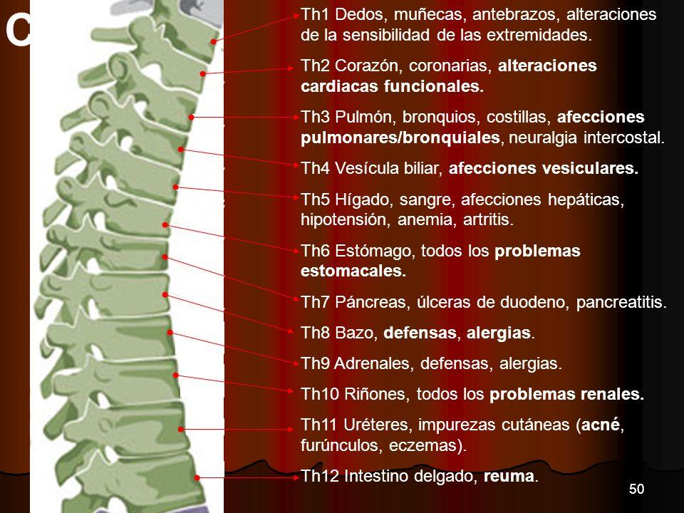 Th1 Dedos, muñecas, antebrazos, alteraciones de la sensibilidad de las extremidades. Th2 Corazón, coronarias, alteraciones cardiacas funcionales. Th3