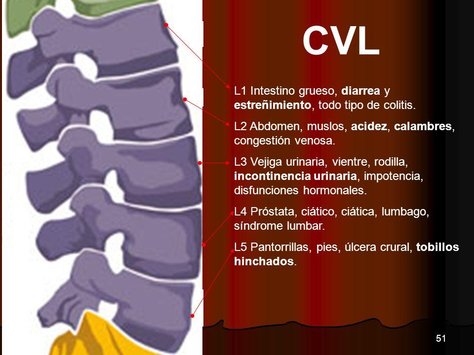 CVL L1 Intestino grueso, diarrea y estreñimiento, todo tipo de colitis. L2 Abdomen, muslos, acidez, calambres, congestión venosa. L3 Vejiga urinaria,