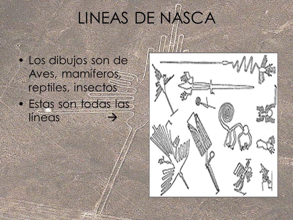 LINEAS DE NASCA Los dibujos son de Aves, mamíferos, reptiles, insectos Estas son todas las líneas