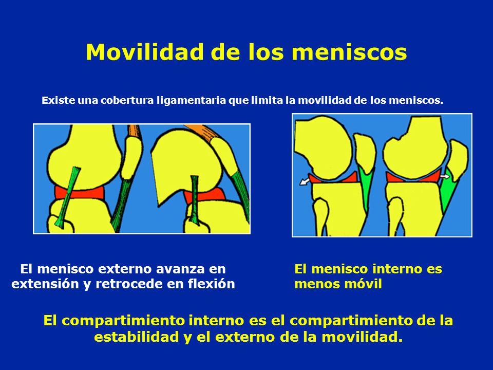 Movilidad de los meniscos El menisco externo avanza en extensión y retrocede en flexión El menisco interno es menos móvil Existe una cobertura ligamen
