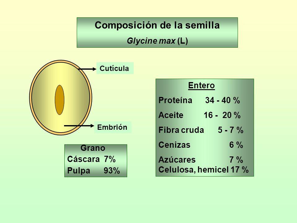Composición de la semilla Glycine max (L) Grano Cáscara 7% Pulpa 93% Cutícula Embrión Entero Proteína 34 - 40 % Aceite 16 - 20 % Fibra cruda5 - 7 % Ce