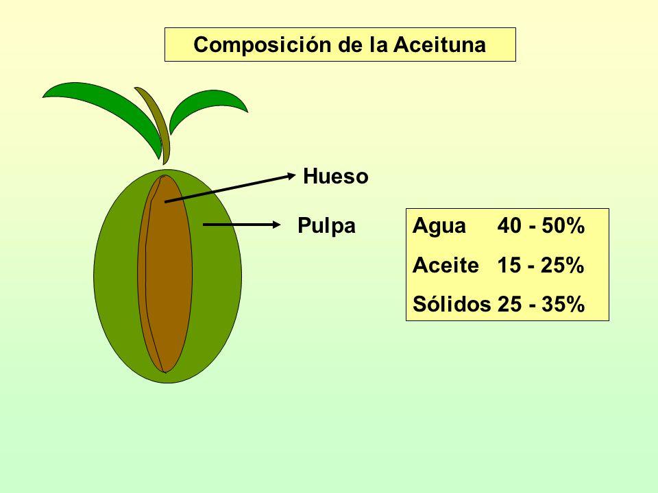 Composición de la Aceituna Hueso Pulpa Agua 40 - 50% Aceite 15 - 25% Sólidos 25 - 35%