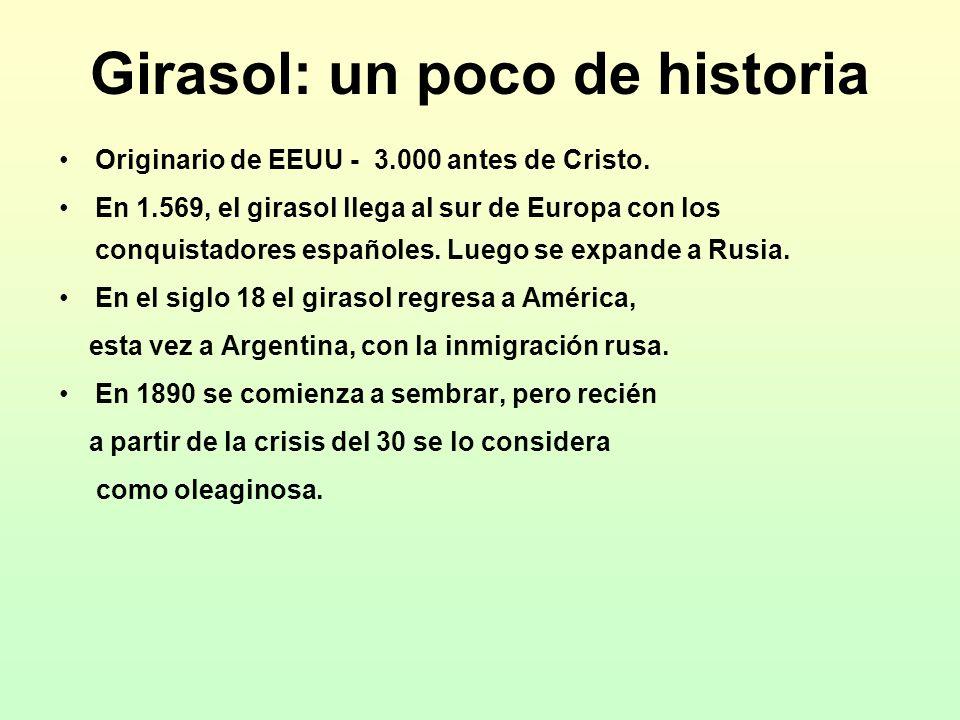 Girasol: un poco de historia Originario de EEUU - 3.000 antes de Cristo. En 1.569, el girasol llega al sur de Europa con los conquistadores españoles.