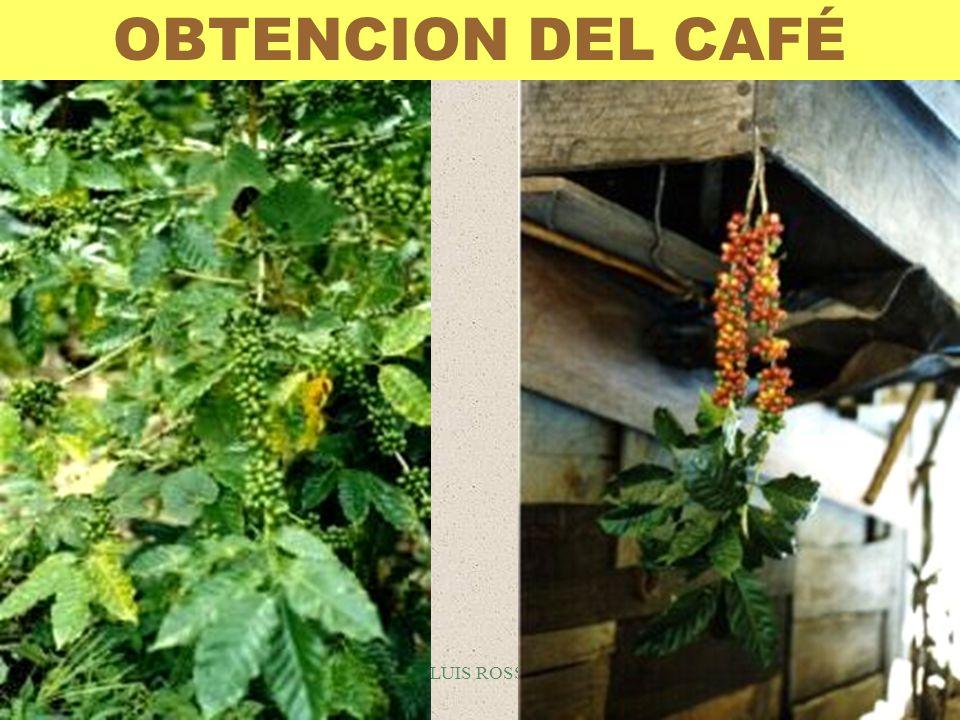 LUIS ROSSI CAFÉ OTRAS FORMAS DE PRESENTACION §El café liofilizado se obtiene de la infusión del café.