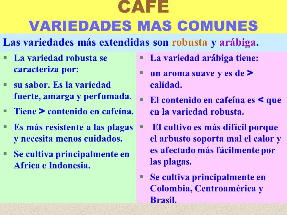 LUIS ROSSI CAFEINA Y SUS EFECTOS §La cafeína es un alcaloide.