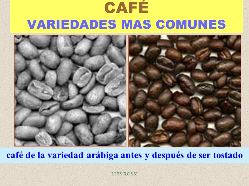 LUIS ROSSI CAFÉ VARIEDADES MAS COMUNES café de la variedad arábiga antes y después de ser tostado