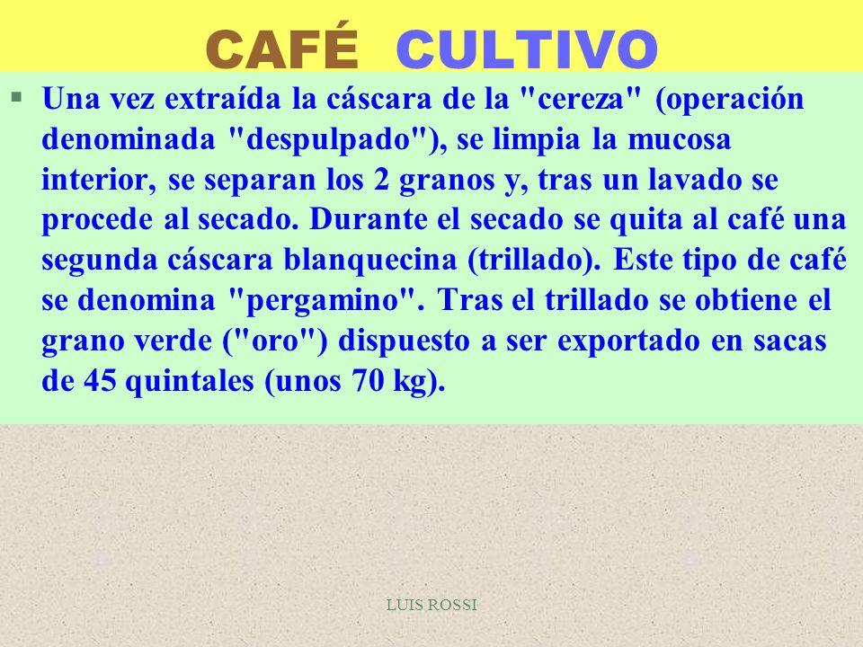 LUIS ROSSI EL CAFÉ DESCAFEINADO §Un método alternativo permite la descafeinización mediante soluciones acuosas, con el inconveniente de que el grano pierde todo su sabor y se hace necesario, por tanto, reintegrárselo después por pulverización.