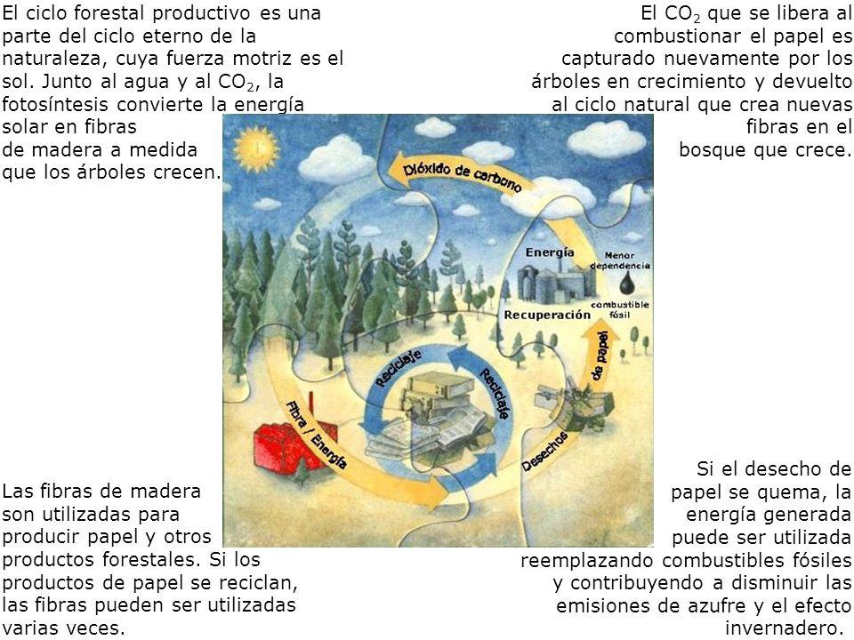 El ciclo forestal productivo es una parte del ciclo eterno de la naturaleza, cuya fuerza motriz es el sol.
