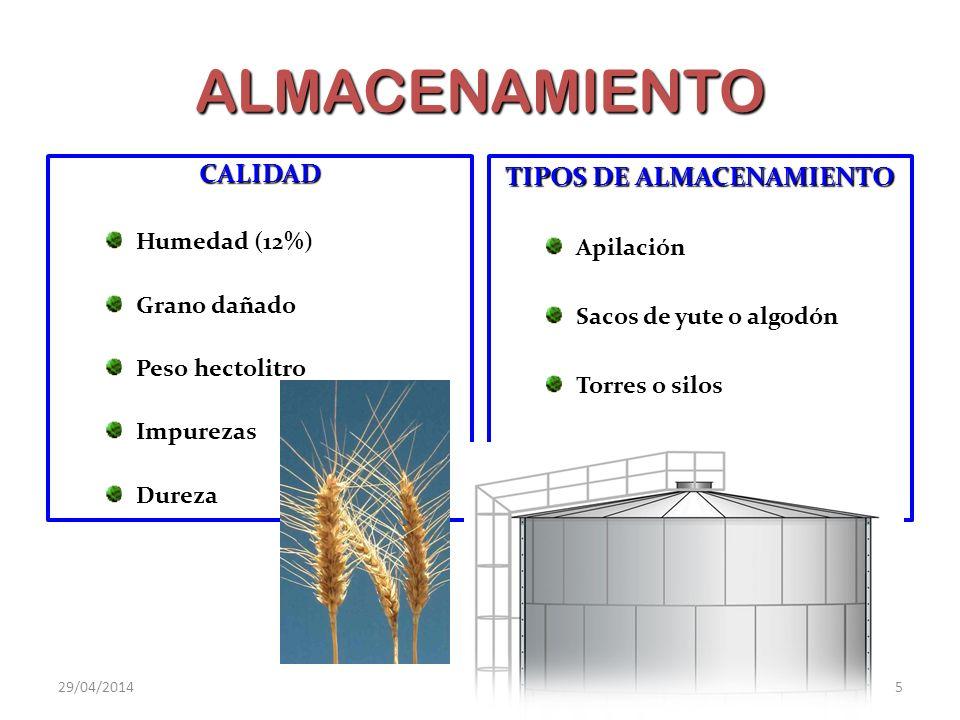 Casi todo el trigo se destina a la fabricación de harinas para panificadoras y pastelería.