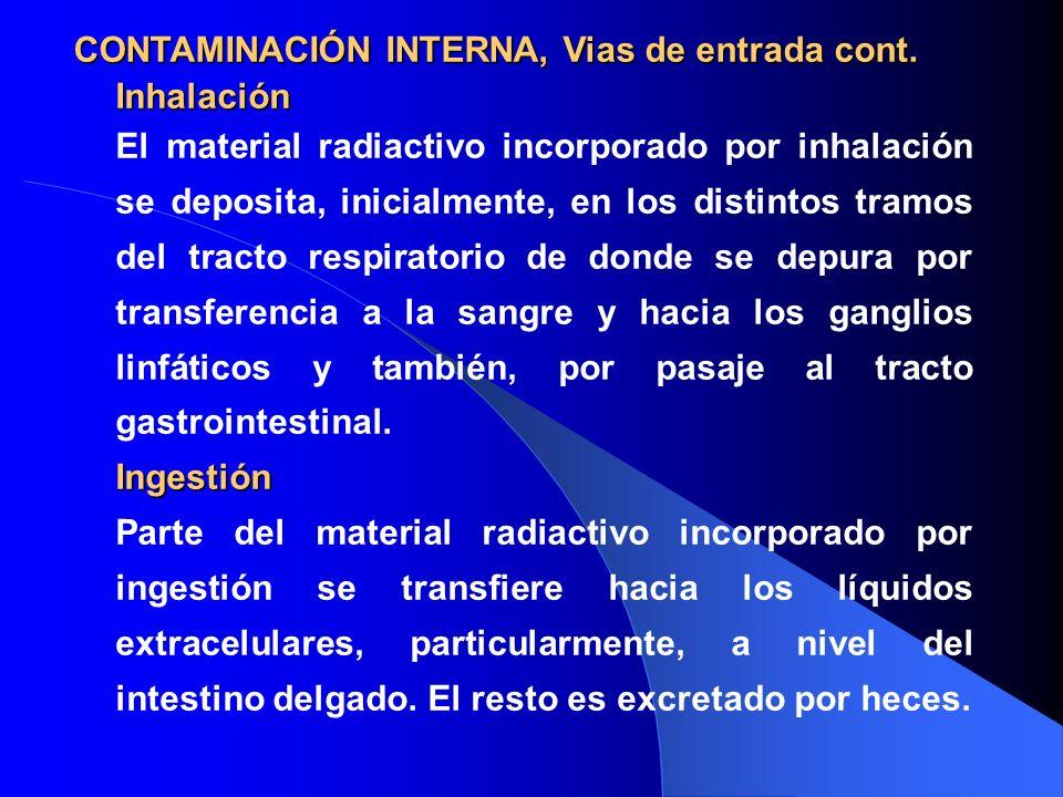 Inhalación El material radiactivo incorporado por inhalación se deposita, inicialmente, en los distintos tramos del tracto respiratorio de donde se de