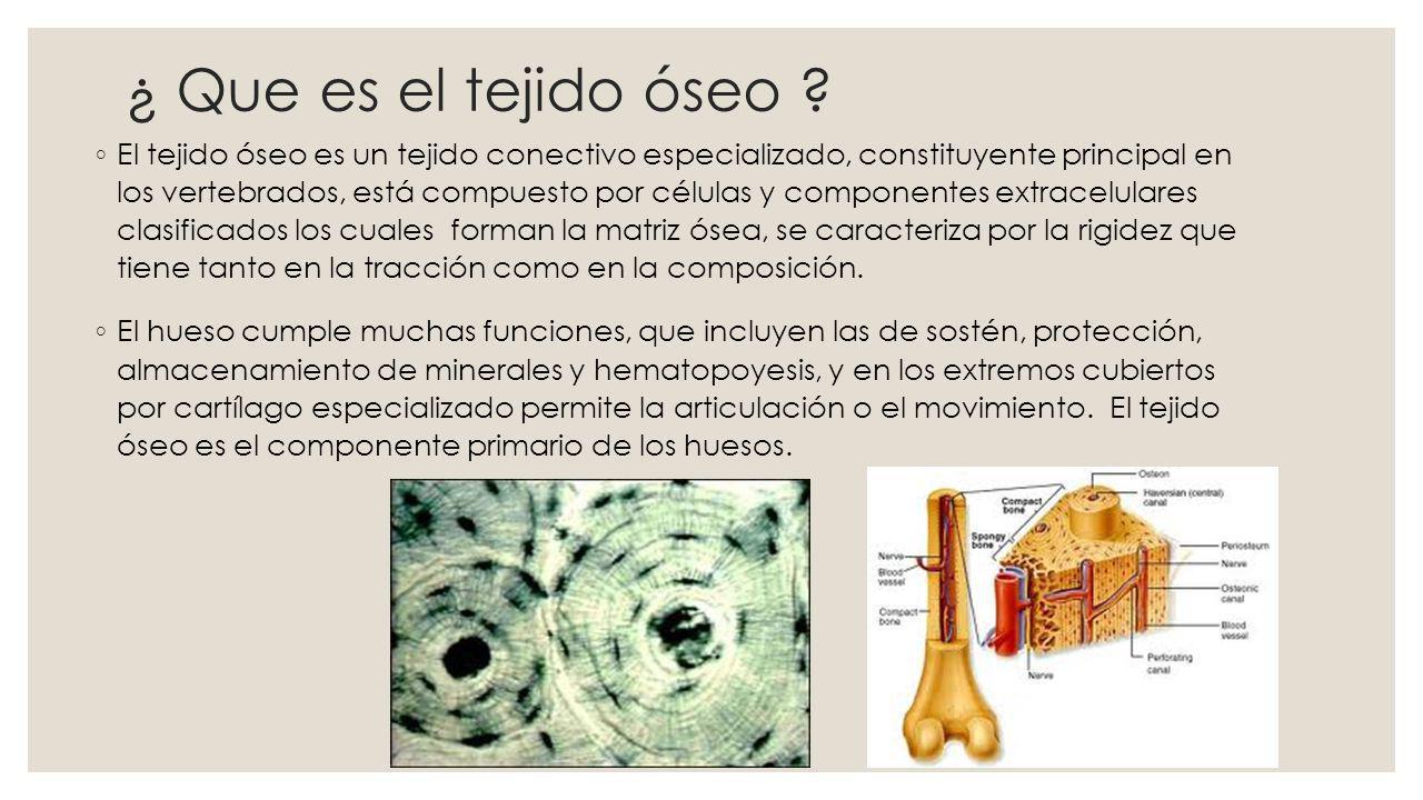 Estructura del tejido óseo La estructura histológica del tejido óseo maduro es igual en la sustancia compacta y la sustancia esponjosa y se designa con el nombre de hueso laminillar.