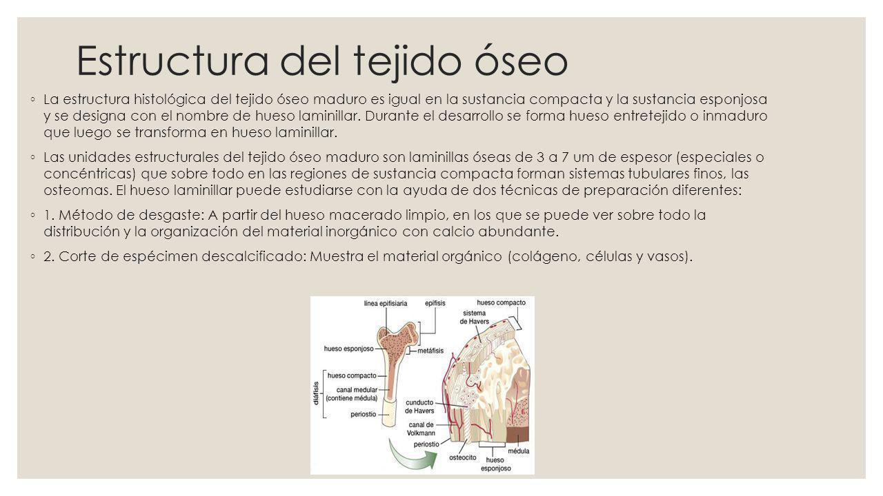 Características del tejido óseo El tejido óseo se caracteriza por su rigidez y gran resistencia tanto como a la tracción a la compresión.
